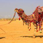 Jaisalmer-Desert-Safari-6_1438939406-1200x707