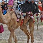 rajasthan-tribal-tour
