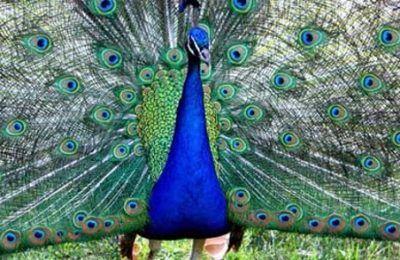 south-india-wildlife